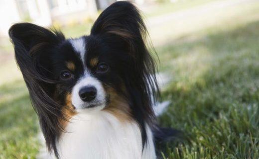 tosatore per cani