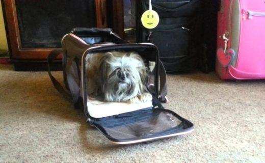 trasportino cane