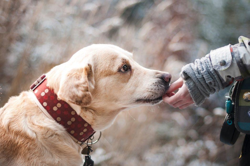 alimenti nocivi per cani